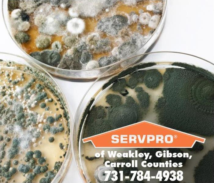 Diffe Kinds Of Mold